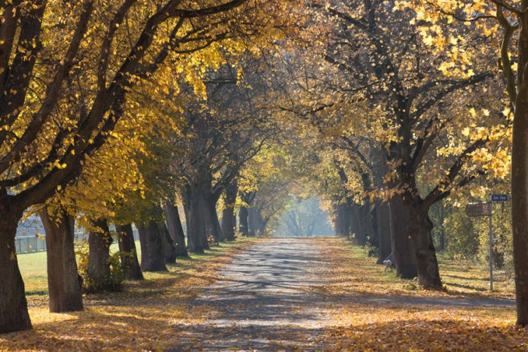 herbst-date-spaziergang_web