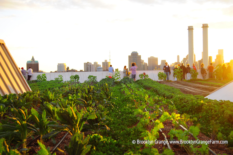 an-evening-event-at-the-Brooklyn-Navy-Yard-farm-o2ok